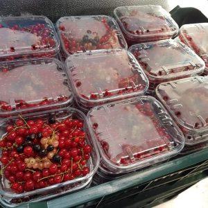 caserola de 0.5 kg coacaze roșie Vișea sau Borșa